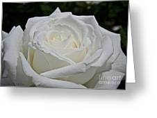 Pope's Rose Greeting Card