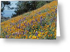 Poppies And Lupine Flowers Blanket Greeting Card