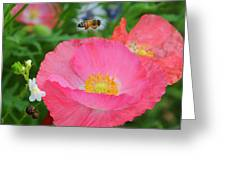 Poppies And Pollinator Greeting Card