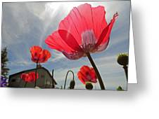 Poppies And Sky Greeting Card