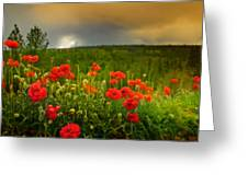 Poppies Before The Rain Greeting Card