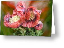Poppies Big And Bold Greeting Card