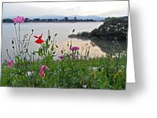 Poppies By The River Greeting Card