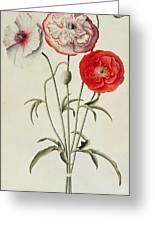 Poppies Corn Greeting Card