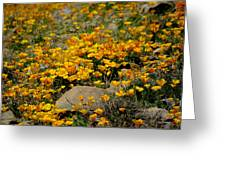 Poppies Everywhere Greeting Card