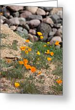 Poppies N River Rocks Greeting Card