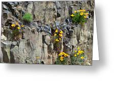 Poppies On The Cliff Greeting Card