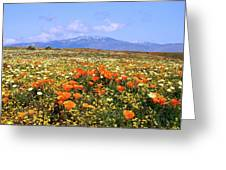 Poppies Over The Mountain Greeting Card
