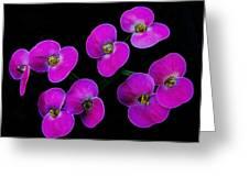 Poppin Pink Petals Greeting Card