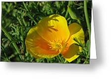 Poppy 01 Greeting Card