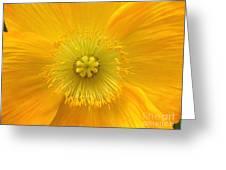Poppy 2 Greeting Card