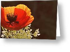 Poppy And Lace Greeting Card
