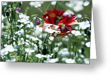 Poppy And White Flowers Greeting Card
