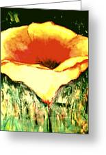 Poppy Cup Of Gold  Greeting Card