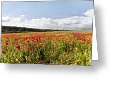 Poppy Field II Greeting Card