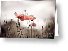 Poppy Flowers 03 Greeting Card