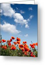 Poppy Flowers 04 Greeting Card