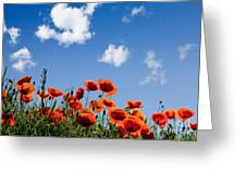 Poppy Flowers 05 Greeting Card by Nailia Schwarz