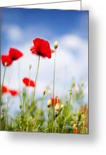 Poppy Flowers 06 Greeting Card
