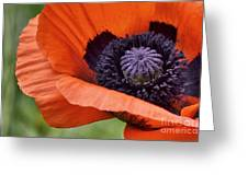 Poppy For Peace Greeting Card