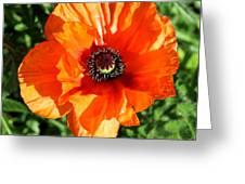 Poppy Blossom Greeting Card
