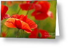 Poppy Love 2 Greeting Card
