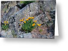 Poppy On The Rocks Greeting Card
