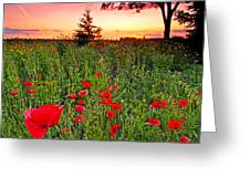Poppy Patch And Previsualization Greeting Card