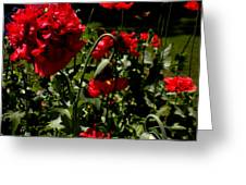 Poppy Pompom Greeting Card