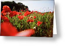 Poppy Stars Greeting Card