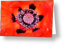 Poppy's Heart Greeting Card