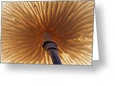 Porcelain Mushroom Oudemansiella Mucida Greeting Card