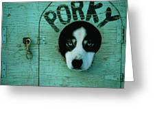 Porky Is One Of Jan Masseks Race Dogs Greeting Card