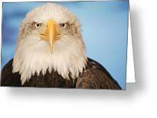 Portrait Of A Bald Eagle Greeting Card