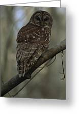 Portrait Of A Barred Owl Perched Greeting Card