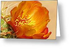 Portrait Of A Cactus Flower Greeting Card