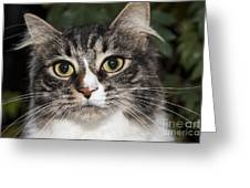 Portrait Of A Cat With Two Toned Eyes Greeting Card