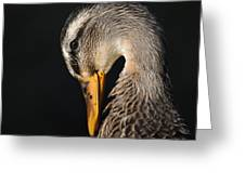 Portrait Of A Duck Poster Greeting Card
