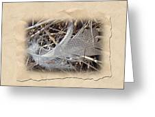 Portrait Of A Feather Greeting Card