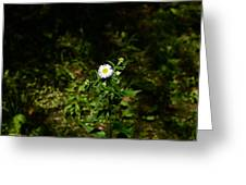 Portrait Of A Flower Greeting Card