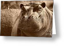 Portrait Of A Hippo Greeting Card