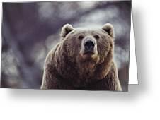 Portrait Of A Kodiak Brown Bear Greeting Card