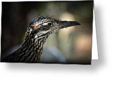 Portrait Of A Roadrunner  Greeting Card