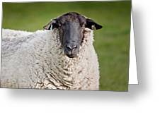 Portrait Of A Sheep Greeting Card