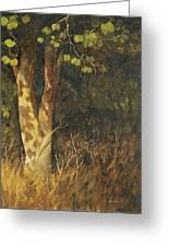Portrait Of A Tree Trunk Greeting Card