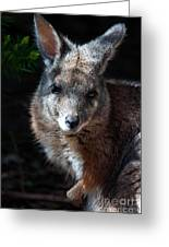 Portrait Of A Wallaby Greeting Card