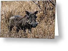 Portrait Of A Warthog Greeting Card