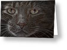 Portrait Of Cutio The Cat Greeting Card