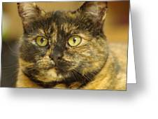 Portrait Of Ginny Greeting Card