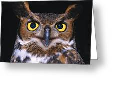 Portrait Of Great Horned Owl Greeting Card